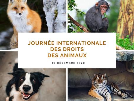 C'est la journée mondiale des droits des animaux !