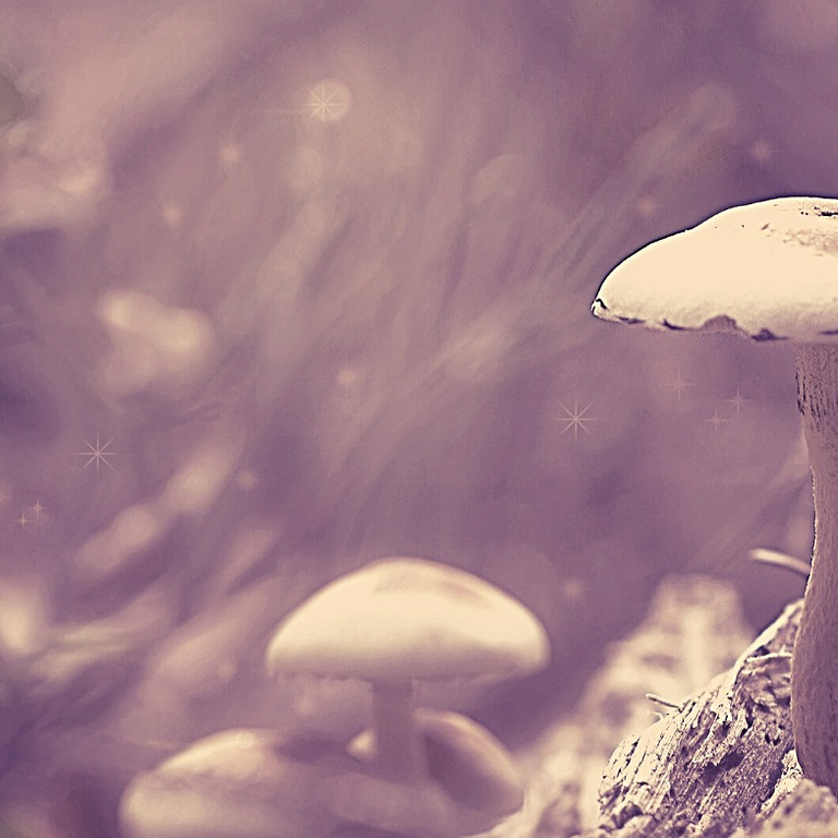 Sacred Mushroom Retreat in Costa Rica