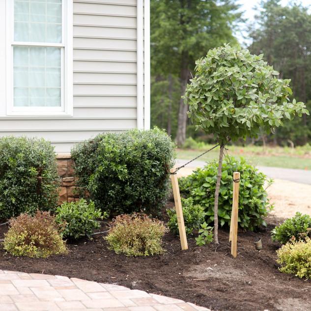 Plant Hardscape