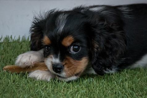Baxter, 2017