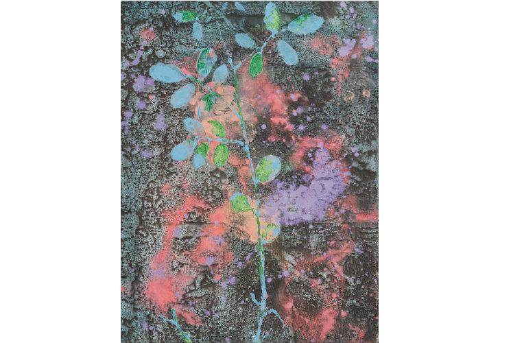 Akira Inumaru Botanique Indigofera Tinctoria #6, 2018