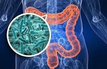 gut microbiome pic.jpg
