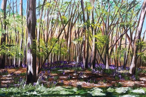 Bluebells in Banstead Woods