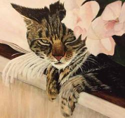 Susie Cat