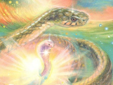 Spirit Animal Messenger: the Snake