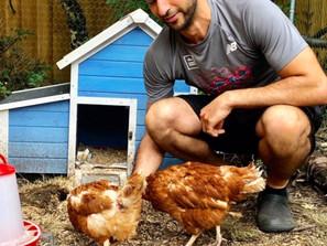 The Joys & Heart Break Of Chicken Rescue