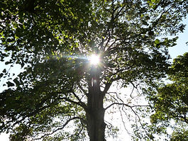 Photograph by Lauren Lodge of sun shining through tree branches