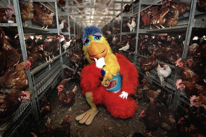 ChickenVERY%20VERY%20VERY%20BEST_edited.