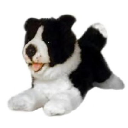 I'm Patch, a border collie puppy