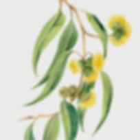 footer_flowers_dementiacarers.jpg