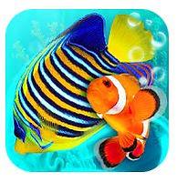 my reef.JPG