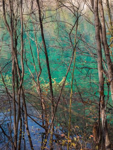 si10_shinyaitahana_sleeping-forest_web.jpg