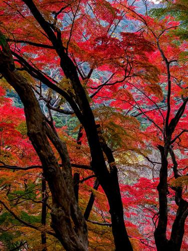 si08_shinyaitahana_redforest_web.jpg