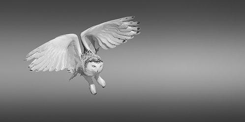 L'ange des neiges