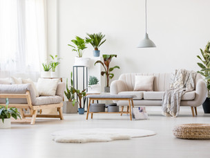 TOP 5 HOUSEPLANTS THAT ARE EASY TO CARE FOR