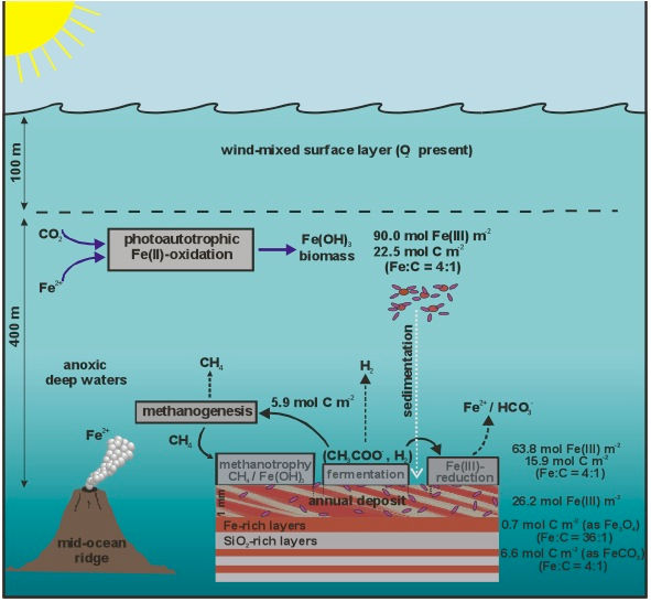 Model for the biological role in Fe cycling in the late Archean-Paleoproterozoic oceans