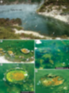 Protozoans and metazoans study