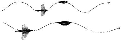 birdpathdots