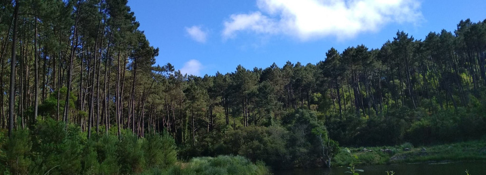 Sintra mountains forest