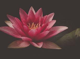 aquatic-plant-beautiful-bloom-blossom-61