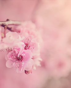 beautiful-bloom-blooming-blossom-567973.