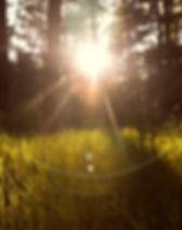 sunlight-867222_1920.jpg