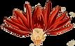 lotus deep etch.png