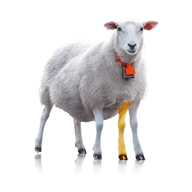 mouton_à_cinq_pattes_copie.png