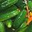 Thumbnail: Ginger Tumeric Pickles - 24 oz