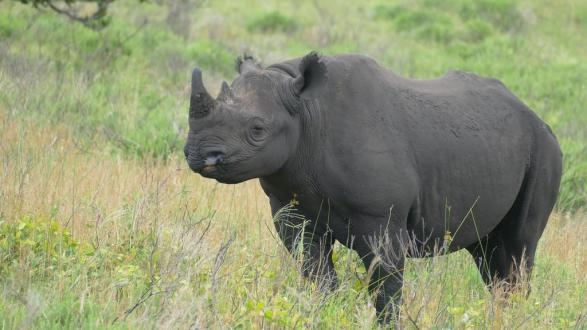 RhinoDec19.jpg