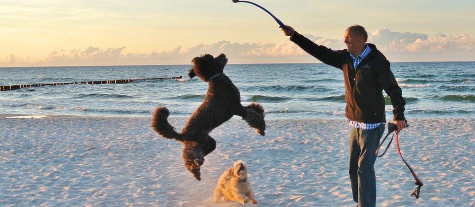 Playas de España en las que están permitidos los perros