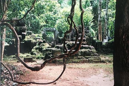 Angkor_Tree.jpg