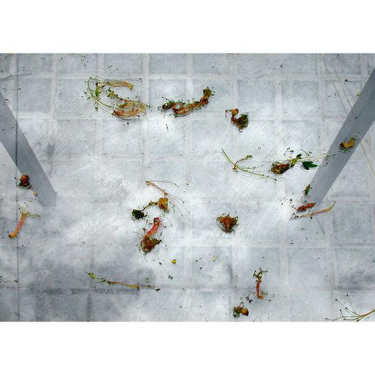 Reflex II / 2004 /  50x70 cm / C-print / Edition: 7
