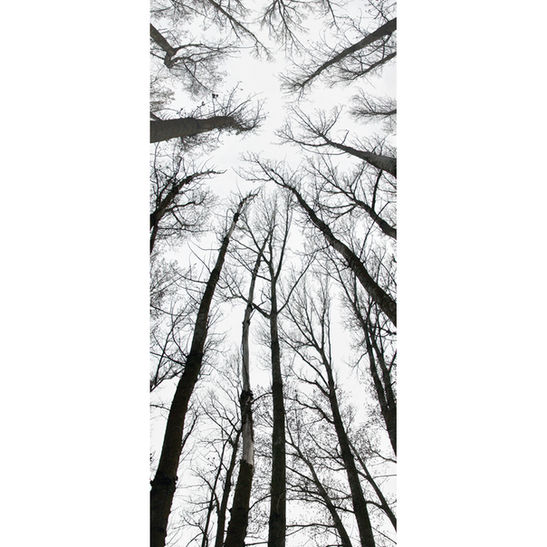 Bovedárbol / 100x45 cm / 2004 / C-print / Edition: 7