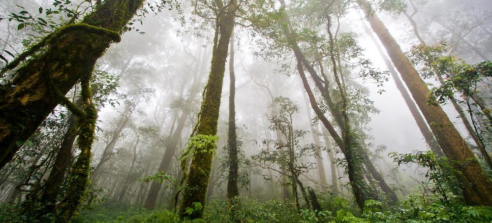 Reforestation - Fuji Xerox
