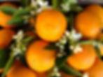 orange-blossom.jpg
