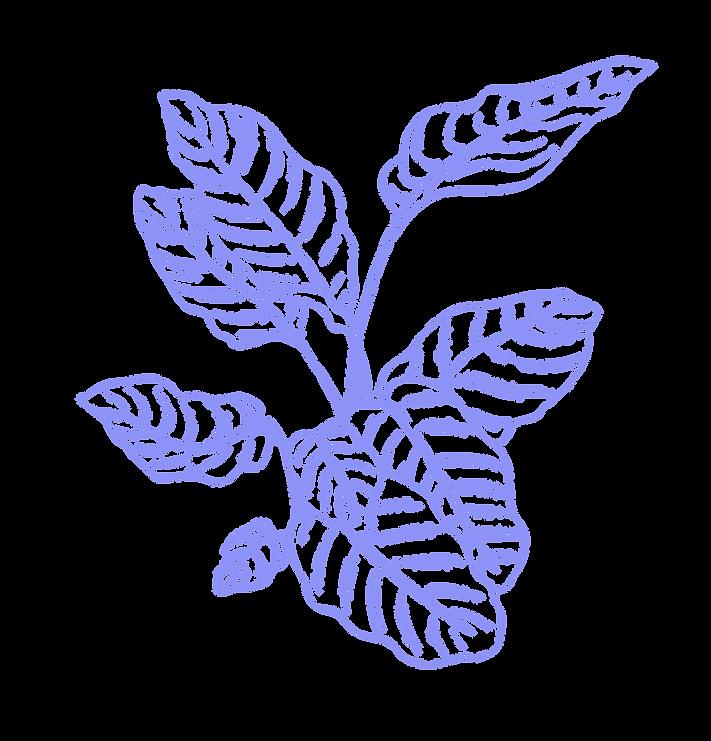 PRAYER PLANTS + CANNABIS -purple-03.png