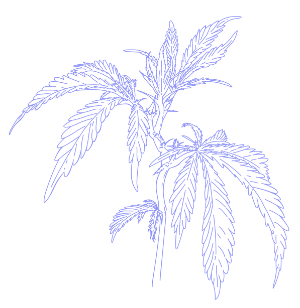PRAYER PLANTS + CANNABIS -purple-04.png