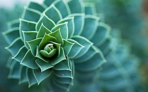 nature-spiral-bokeh-micro1.jpg