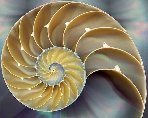 Shell Biomimicry.jpg