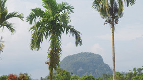 How to visit Mulu National Park on a budget