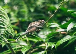 Scientific breakthrough on the cloning of endangered species