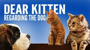 Dear Kitten, Viral Campain