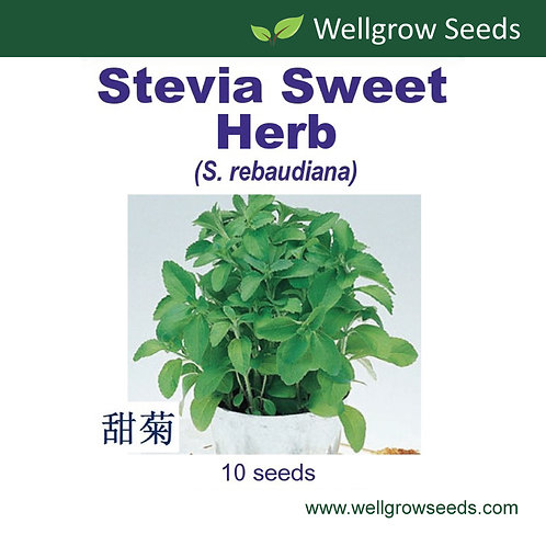 Stevia Sweet Herb