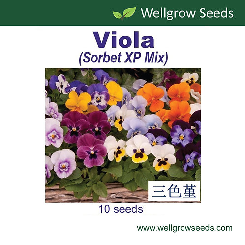 Viola (Sorbet XP Mix)