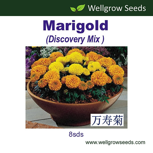 Marigold (Discovery Mix)