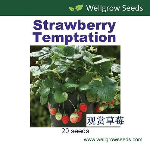 Strawberry Temptation