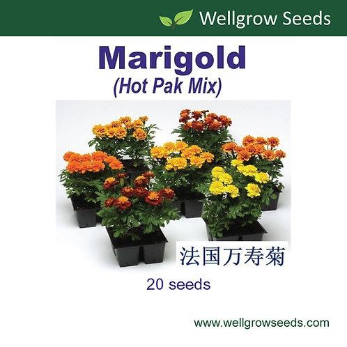Marigold (Hot Pak Mix)