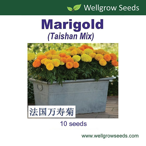 Marigold (Taishan Mix)