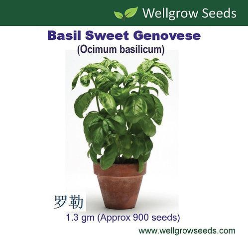 Basil Sweet Genovese